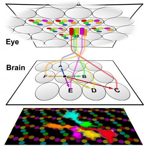 graphic of fly eye