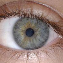 closeup of human eye