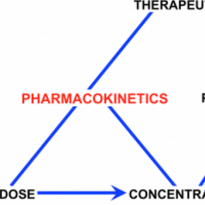 pharmacokinetics diagram