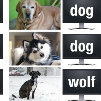 Dogs and wolves comparison